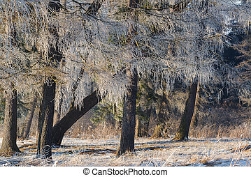 Beautiful winter scene with icy trees