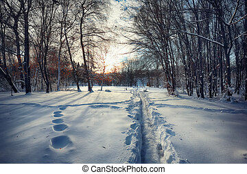 Beautiful winter scenery with trees in the snow