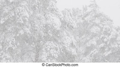 Beautiful Winter Snowy Coniferous Forest During Snowy Snowstorm Day. Close Up