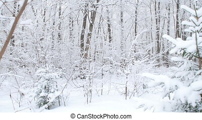 Beautiful winter snowy forest - Beautiful winter snowy white...