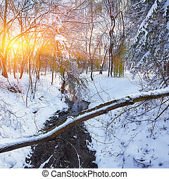 Beautiful winter sun with trees in the snow