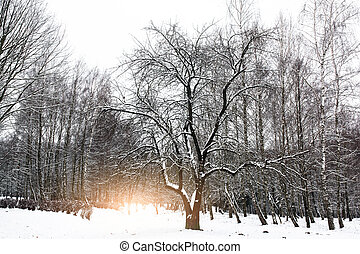 Beautiful winter sunset. Carpathians. National park