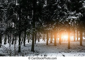 Beautiful winter sunset in Carpathians
