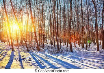 Beautiful winter sunset with trees in the snow.
