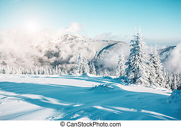 beautiful wintry landscape - Fantastic winter trees glowing...