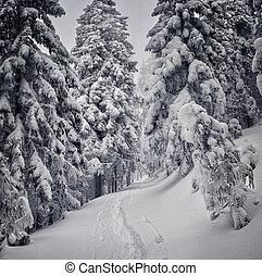 beautiful wintry landscape - Majestic winter landscape....