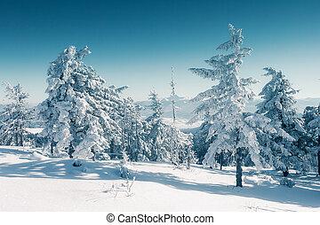 beautiful wintry landscape - Majestic winter trees glowing...