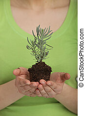 Beautiful woman holding a young plant in hands