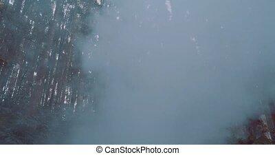 Beautiful woman in hazy forest - Beautiful brunette woman...