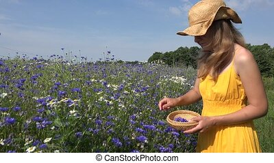 Beautiful woman in yellow dress gather pick cornflower herb blooms. 4K