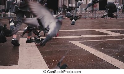 Beautiful woman tourist with camera walks near San Marco basilica and flock of pigeons in Venice Italy slow motion.