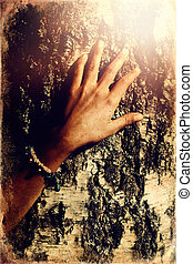 Beautiful womans hands on birch crust, old photo effect. - ...