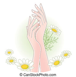 woman's hands with chamomile flower - Beautiful woman's ...