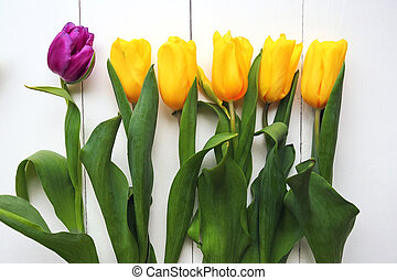 Beautiful yellow and purple tulips on white background, top view