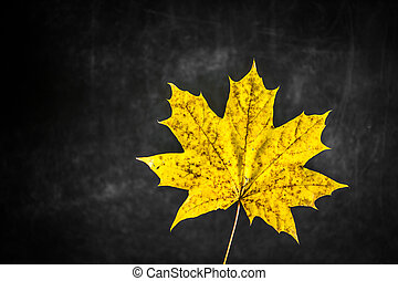 beautiful yellow autumn leaf on black background,