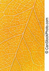 Beautiful yellow autumn leaves background