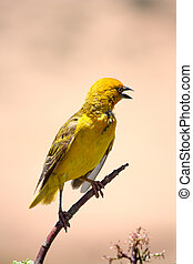 yellow bird perched on a branch in a nature reserve