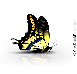 yellow butterfly - beautiful yellow butterfly on a white...