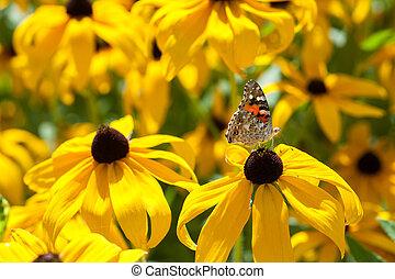 beautiful yellow butterfly on flower