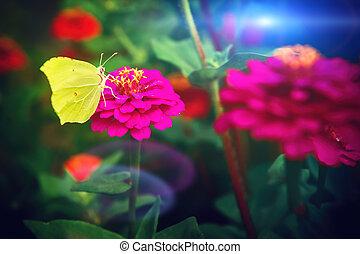 Beautiful yellow butterfly sitting on pink zinnia flower. Nature background