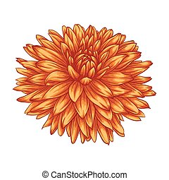 beautiful yellow dahlia isolated on white background. for greeting cards and invitations of the wedding, birthday, Valentine's Day, mother's day and other seasonal holidays