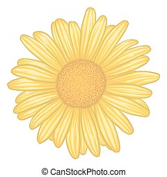 beautiful yellow daisy flower with effect watercolor isolated on white background.