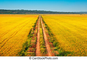 beautiful yellow fields with a blue sky