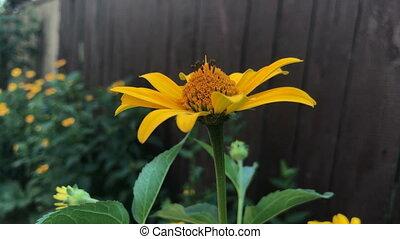beautiful yellow flower close-up courtyard