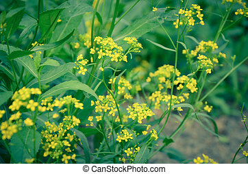 Beautiful yellow flowers in the forest