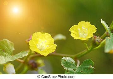 beautiful yellow flowers in the garden