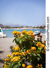 Beautiful yellow flowers on sea view background