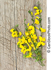 Beautiful yellow flowers on wooden rustic background