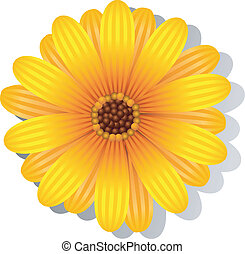 Beautiful yellow Gerber Daisy over white. EPS 8, AI, JPEG