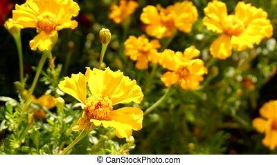 Beautiful yellow gerbera  flowers on a bokeh background.