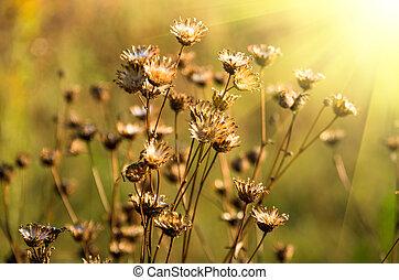 Beautiful yellow grass