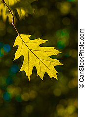 Beautiful yellow leaf in autumn background