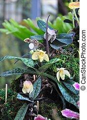 beautiful yellow orchid.