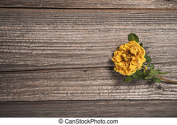 Beautiful yellow rose on wooden background