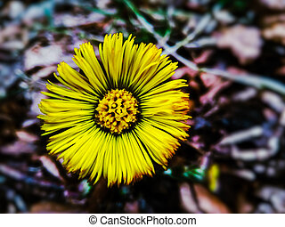beautiful yellow spring wild flower in the forest close up