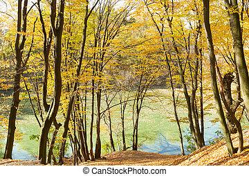 Beautiful yellow trees in autumn park