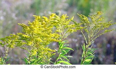 Beautiful yellow wild flowers