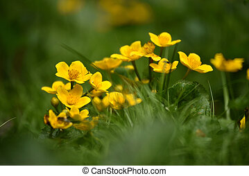 Beautiful yellow wildflowers blooming in the meadow