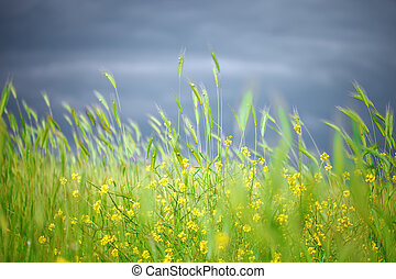 Beautiful yellow wildflowers in the green grass.