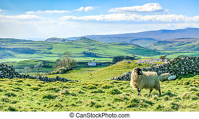 Beautiful yorkshire dales landscape stunning scenery england tourism uk green rolling hills sheep