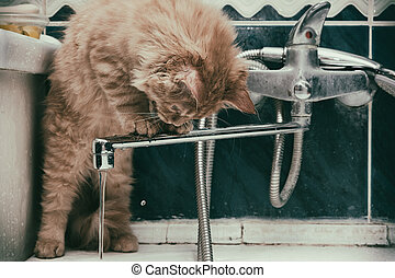 young cat drinks tap water in the bathroom