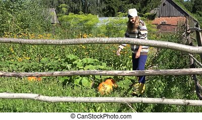 Beautiful young farmer woman with headscarf choosing pumpkin vegetable plant for harvesting. 4K