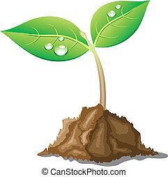 Beautiful young sprout. - .Young sprout in ground. Vector...