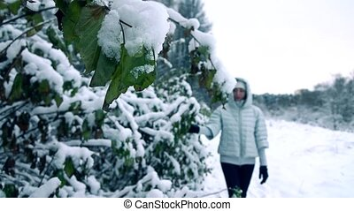 Beautiful young woman shaking off snow from branches in beautiful snowy forest. Slow motion shot, cold colors