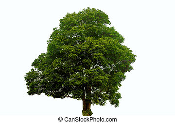 green tree on a white background