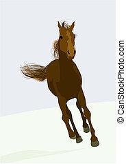 beautifull, race-horse
